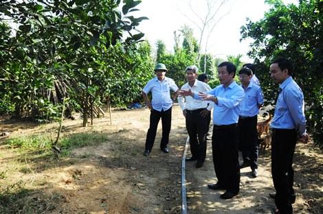 Phó Chủ tịch UBND tỉnh Nguyễn Văn Phương khảo sát vườn cam Nam Đông