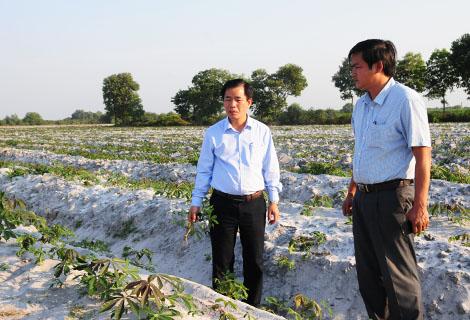 Phó Chủ tịch UBND tỉnh Nguyễn Văn Phương (trái) kiểm tra tình hình bệnh khảm lá sắn tại xã Phong Hiền