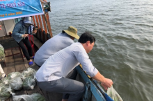 Competent agencies release young prawns and crabs into Tam Giang lagoon